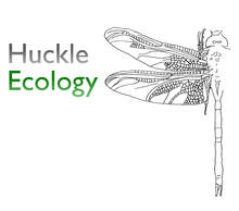 Huckle Ecology Logo - dragonfly